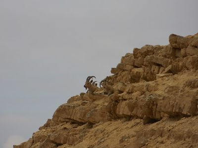 Western cliff trail1.jpg